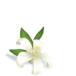 thé vert au jasmin* (thé vert*, fleurs de jasmin*)