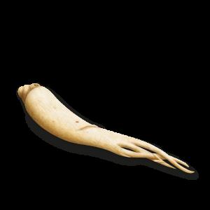 raíz de ginseng