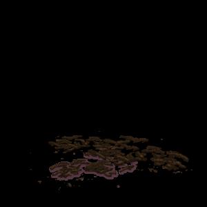 hierba mate